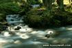 Carpathian river